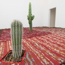 Fiamma Montezemolo | The Three Ecologies |2015 |  kilim, 8 cactus, bark Environmental dimensions | Installation View  at Magazzino, Roma 2015.