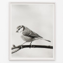 Jonas Dahlberg, Bird, 2015 | Pigment print on acid free cotton rag 92 x 74 cm